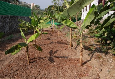 Vegetable Garden at Ma Niketan, Thane (2008)
