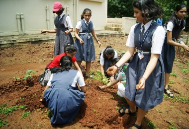 Tree Plantation – Mukta Jivan, Vehloli – 15th August (2013)